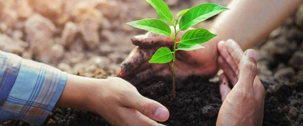 Az ALTEO tavaly év végén indított el karbonlábnyom-semlegesítő kezdeményezését.
